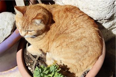 Calcata-fotografia-gatto4