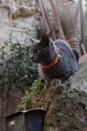 Calcata-fotografia-gatto6