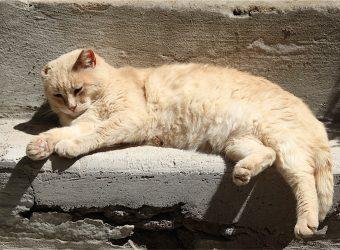 I gatti di Calcata