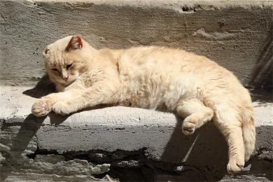 Calcata-fotografia-gatto3